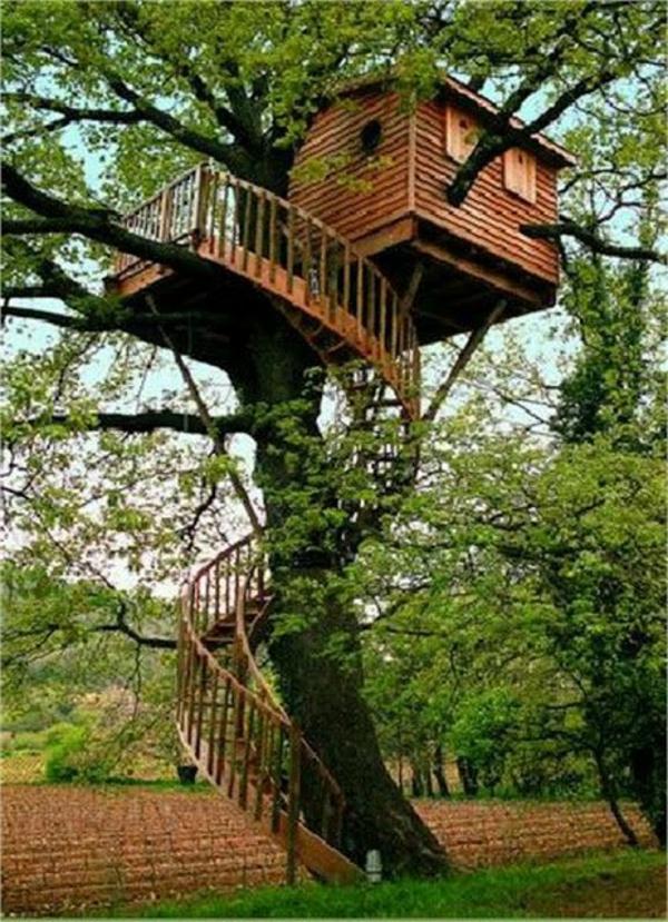 cabanes-dans-les-arbres-branches-qui-poussent-de-la-maison