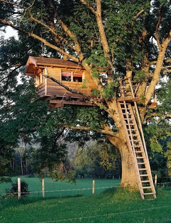 cabanes-dans-les-arbres-cabane-avec-échelle