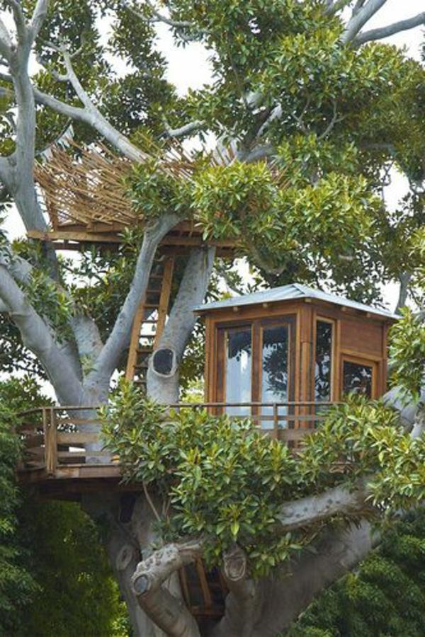 cabanes-dans-les-arbres-maisonette-juchée-sur-l'arbre