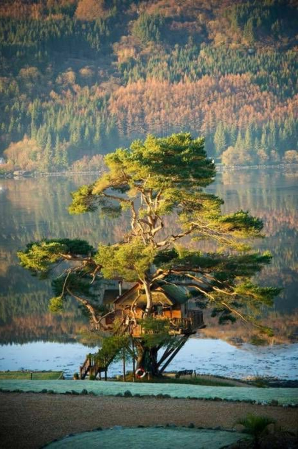 cabanes-dans-les-arbres-une-cabane-bâtie-sur-un-arbre-remarquable
