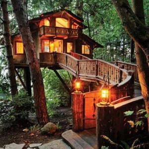 Les cabanes dans les arbres - architecture fantastique au coeur de la forêt