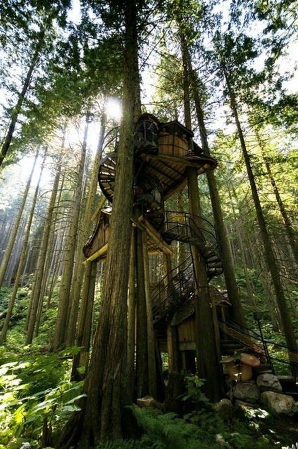 cabanes-dans-les-arbres-une-cabane-dans-les-pins