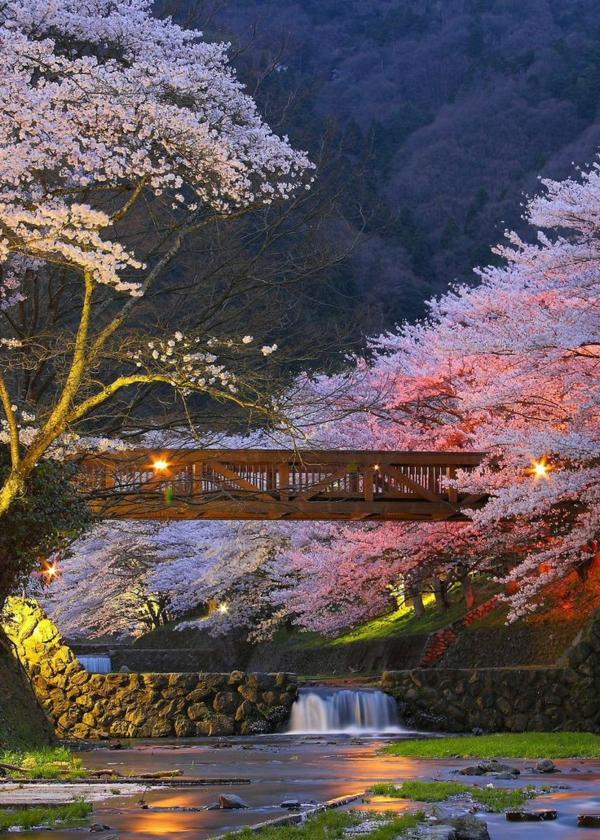 cerisier-japonais-à-Kyoto