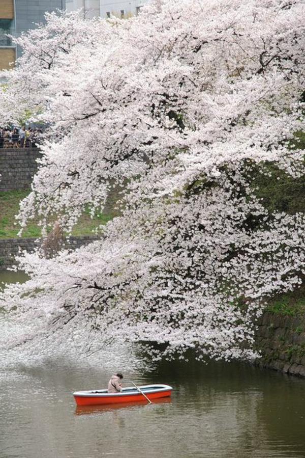 cerisier-japonais-et-petite-barque-sous-lui