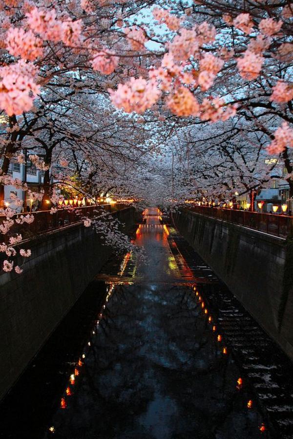 cerisier-japonais-Meguro-au-printemps