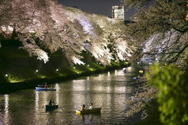 cerisier-japonais-Meguro-pendant-la-nuit