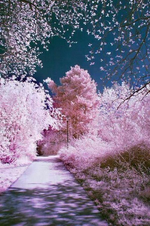 cerisier-japonais-allée-romantique