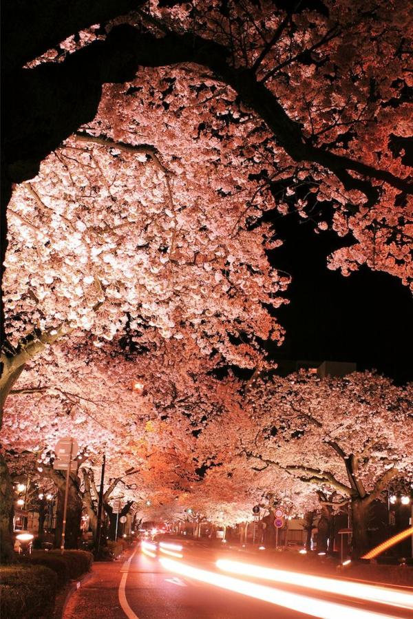 cerisier-japonais-arbres-magnifiques