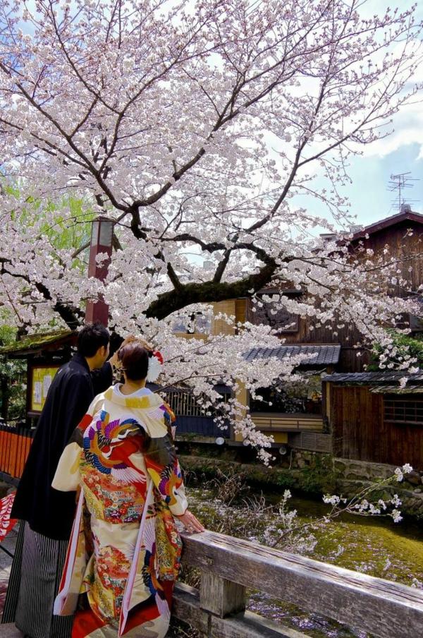 cerisier-japonais-contemplation-des-fleurs-magnifiques