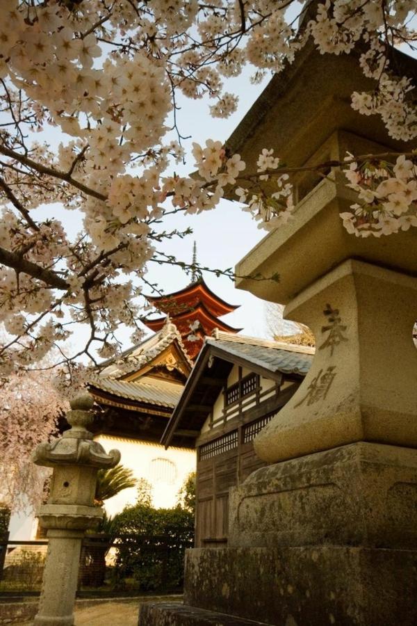 cerisier-japonais-des-temples-de-Hiroshima