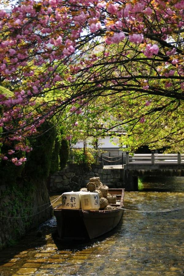 cerisier-japonais-destinations-de-voyages