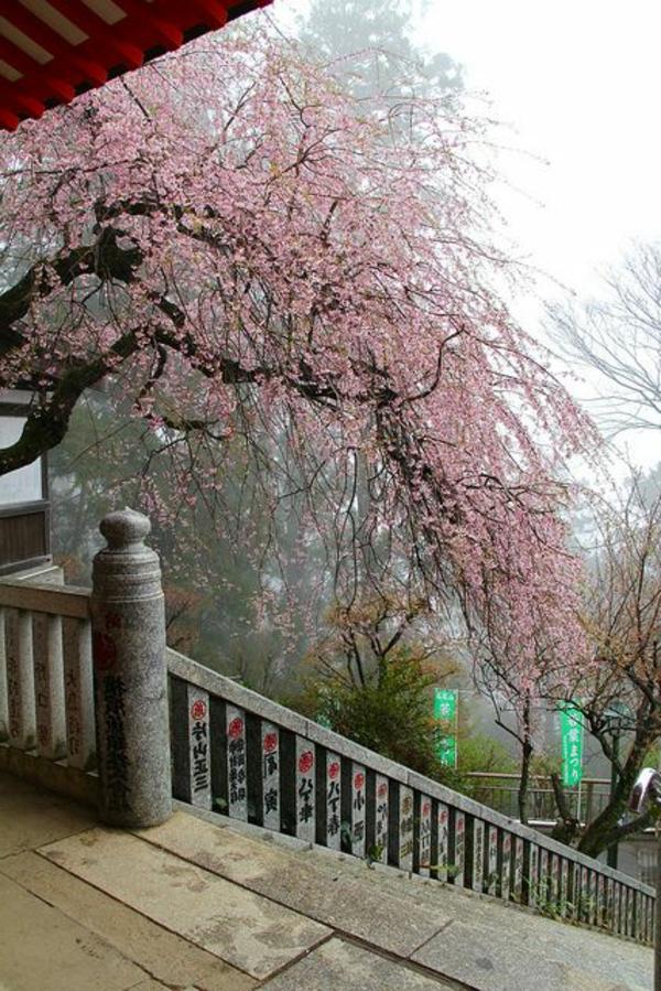 cerisier-japonais-devant-le-temple
