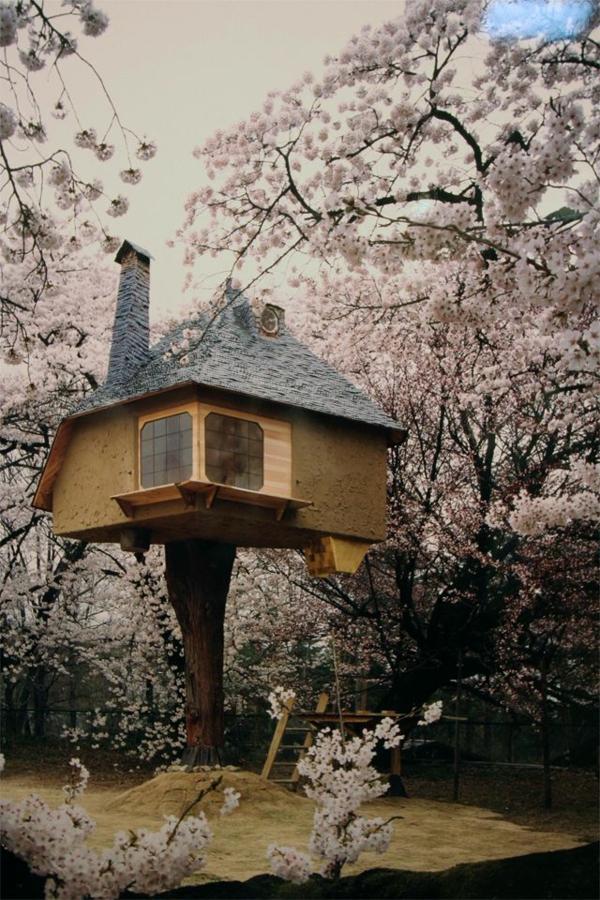 cerisier-japonais-et-floraison-des-arbres-et-maison-miraculeuse