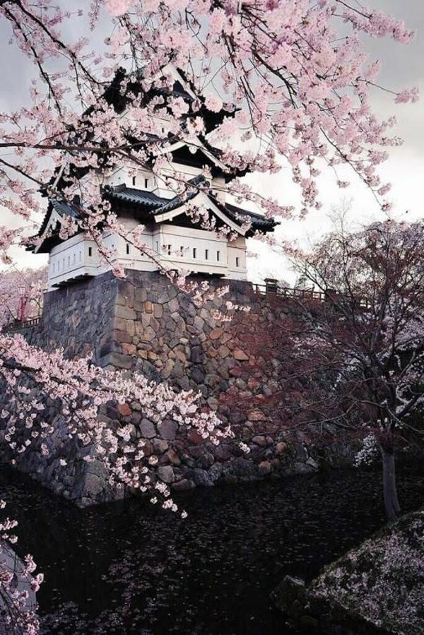 cerisier-japonais-et-joli-temple