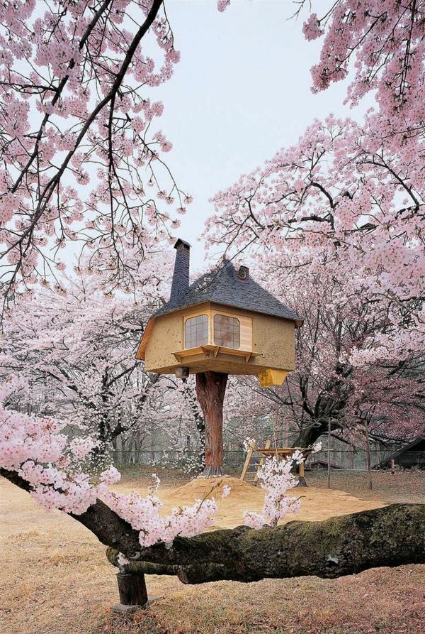 cerisier-japonais-et-une-petite-maison-surélevée
