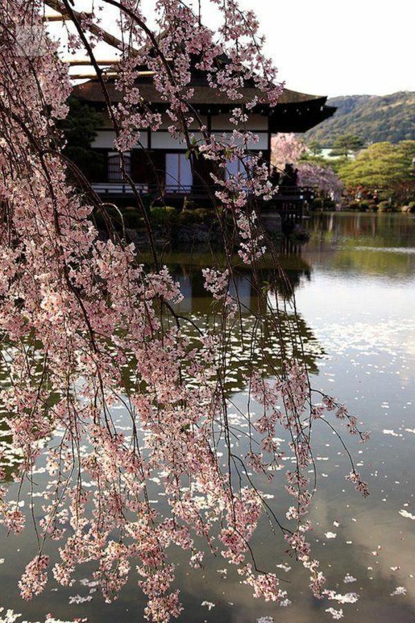 Le cerisier japonais 85 points de vues - Arbre japonais rose ...