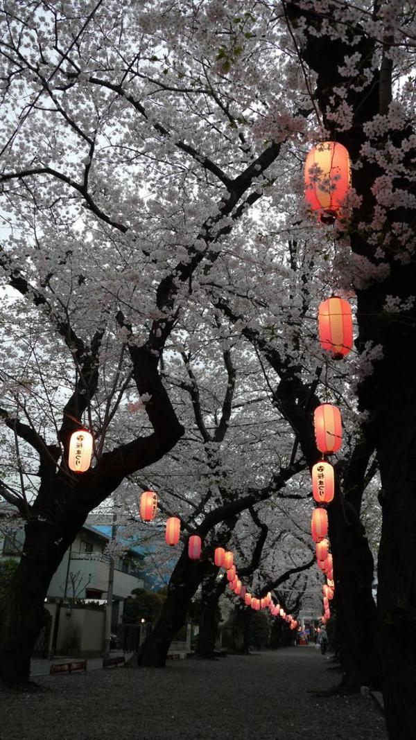 cerisier-japonais-lanternes-japonaises-allumées