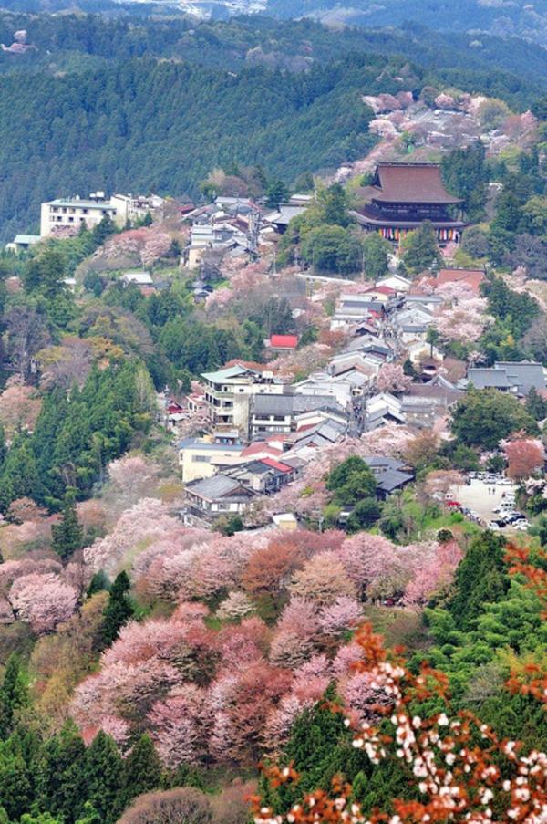cerisier-japonais-paysage-japonais
