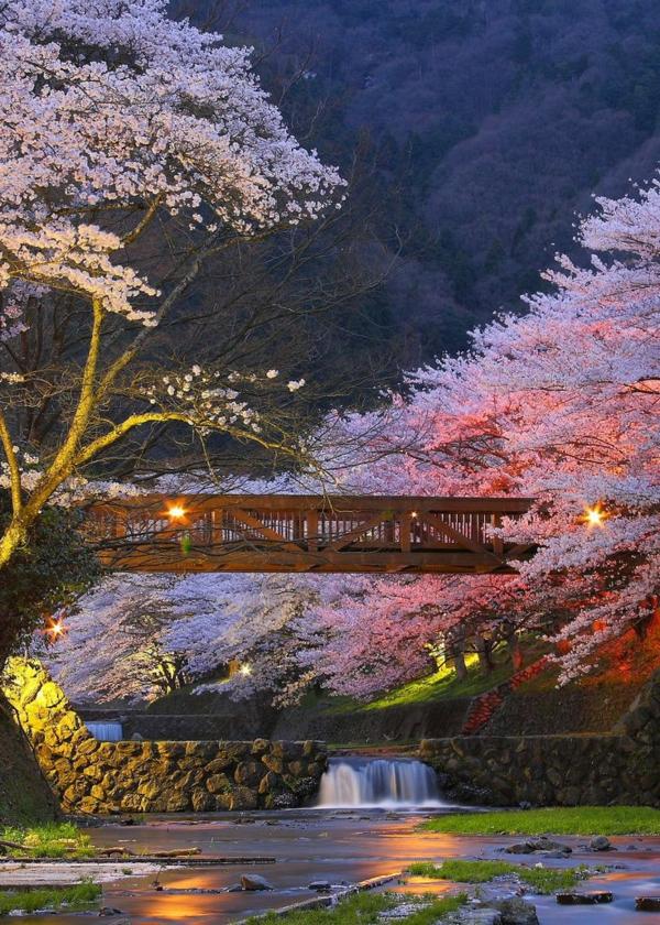 cerisier-japonais-paysage-unique