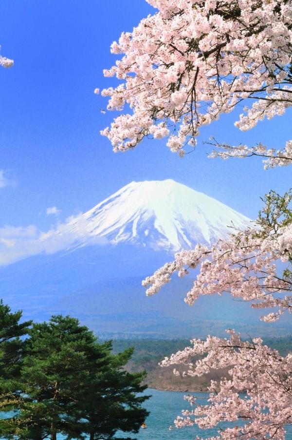 cerisier-japonais-sommet-de-montagne-enneigé