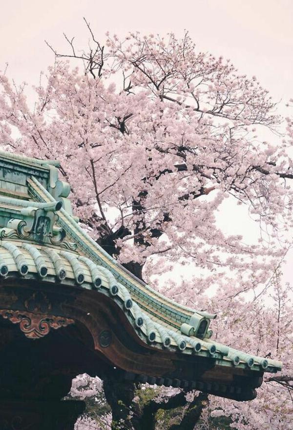 cerisier-japonais-toiture-de-temple-japonais
