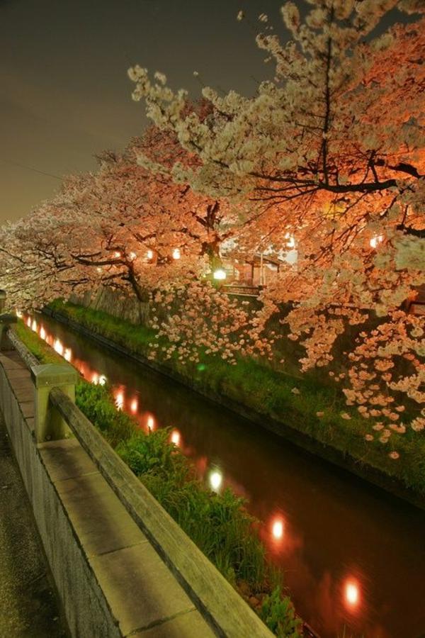 cerisier-japonais-un-canal-magnifique
