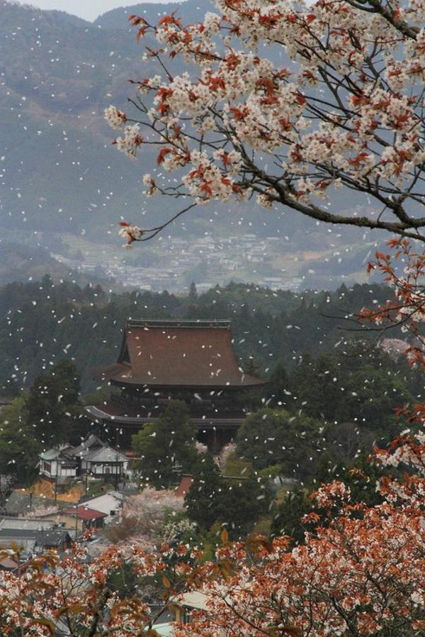 cerisier-japonais-un-paysage-magique-du-Japon