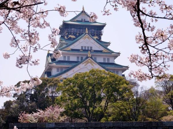 cerisier-japonais-un-temple-magnifique-et-des-rameaux-de-cerisiers