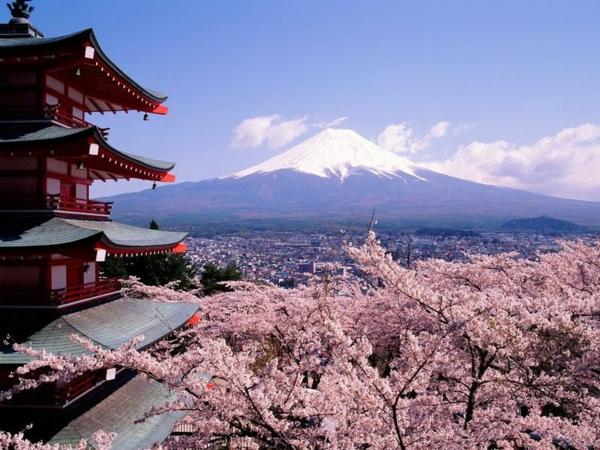 cerisier-japonais-un-temple-magnifique-et-le-sommet-de-la-montagne