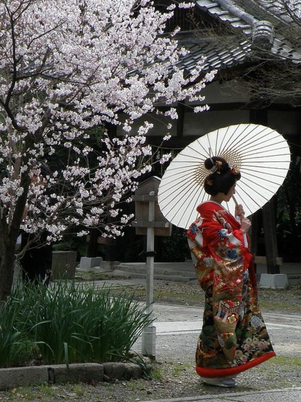 cerisier-japonais-une-femme-en-kimono