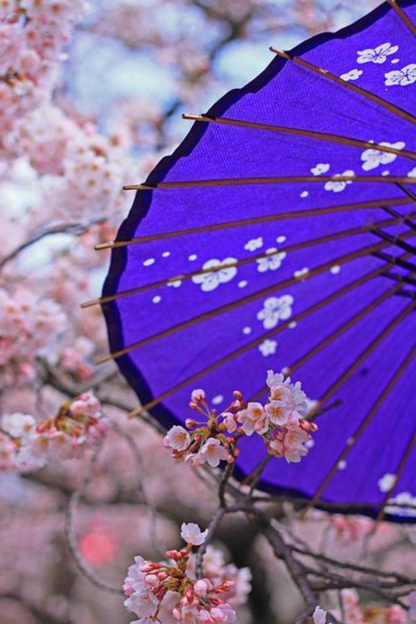 cerisier-japonais-une-parapluie-bleue