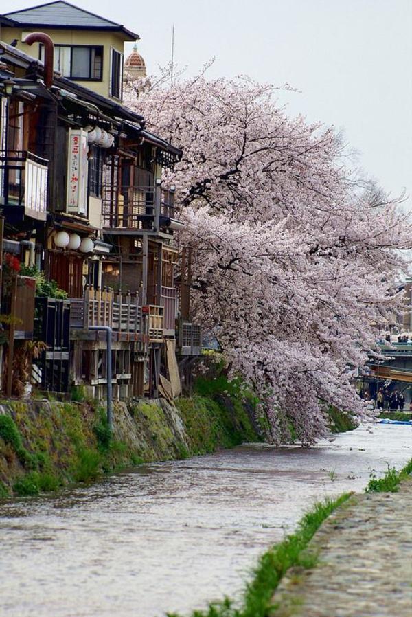 cerisier-japonais-vue-du-Japon