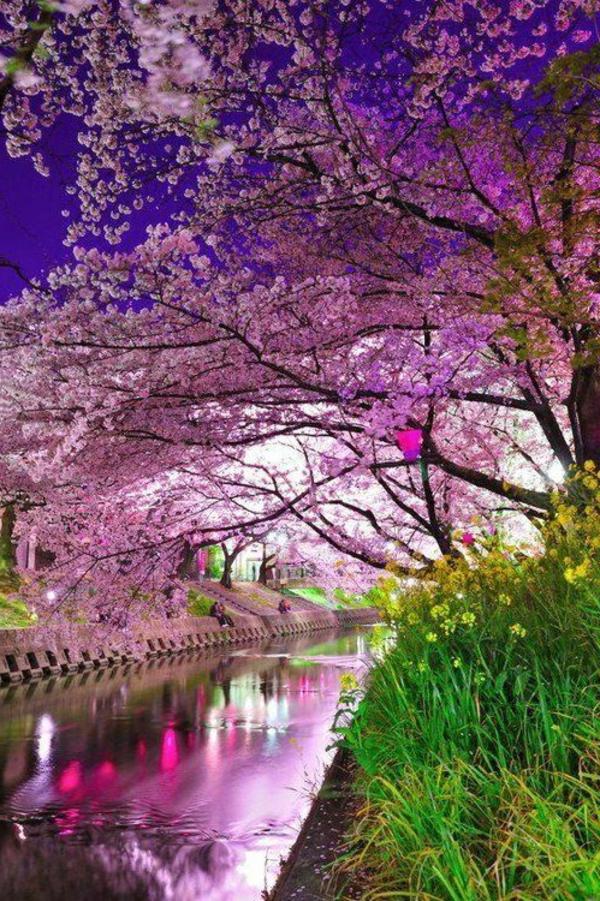 cerisier-japonais-vue-splendide-au-temps-du-hanami