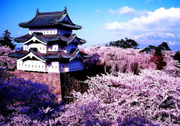 cerisier-japonais-vue-traditionnelle