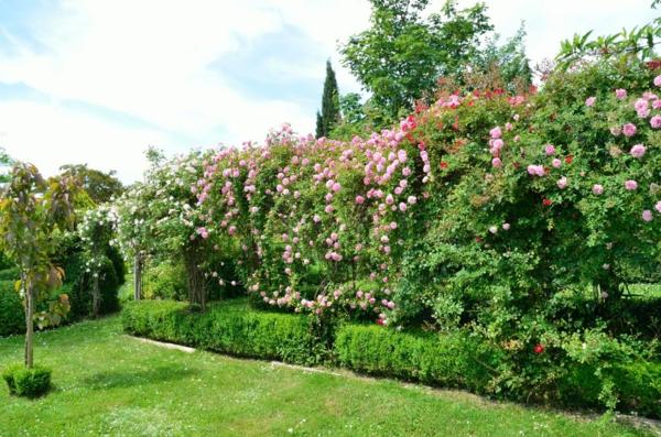 haie-de-fleurs-rose