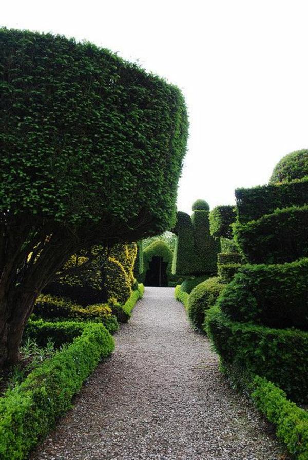 haie-verte-jardin-arbres