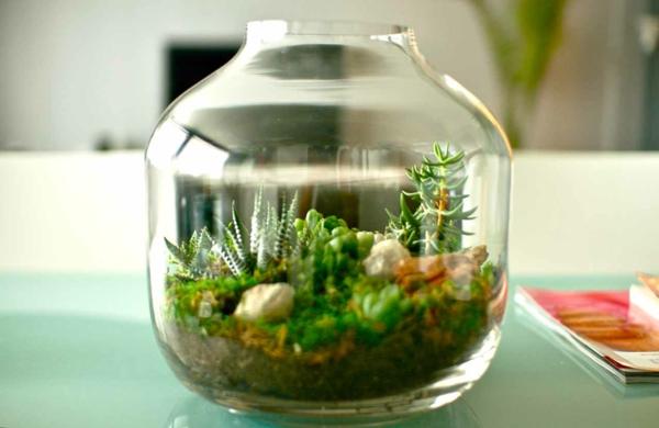 La plante verte d 39 int rieur for Idee deco plante interieur