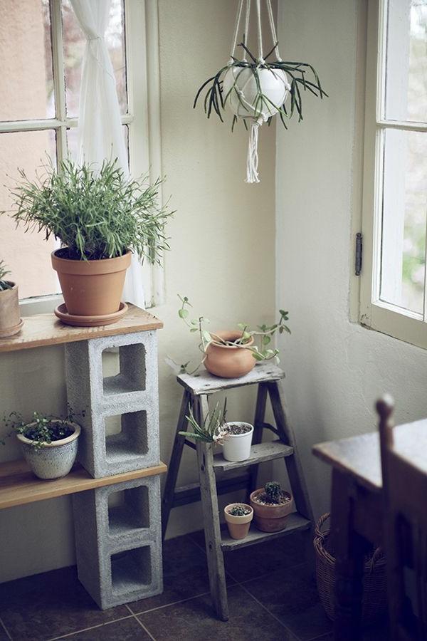jardin-au-coin-plantes-vertes-sur-echelle