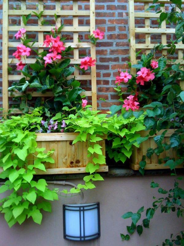 jardinière-avec-treillis-des-fleurs-et-des-treillis-un-mur-en-briques