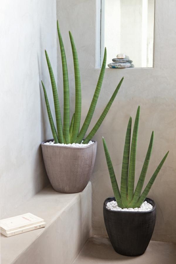 la-salle-détails-zen-feng-shui-plante-verte
