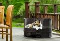 Le lit pour chien – nécessaire et amusant