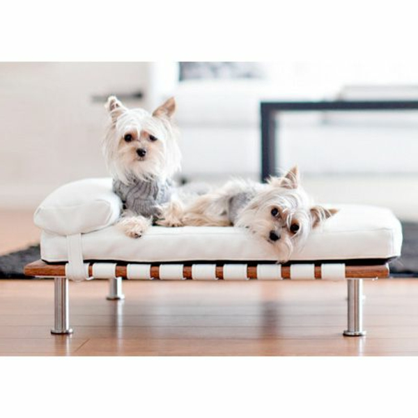 lit-pour-chien-et-deux-chiens-mignons