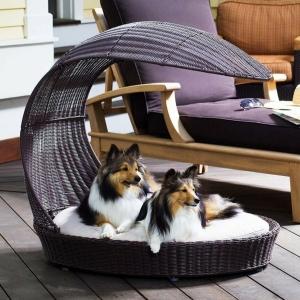 Le lit pour chien - nécessaire et amusant