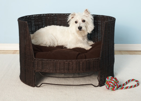Le lit pour chien – nos amis à quatre pattes ont aussi du style
