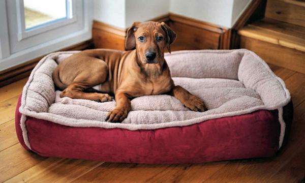 La niche pour chiens - modèles originals et esthétiques