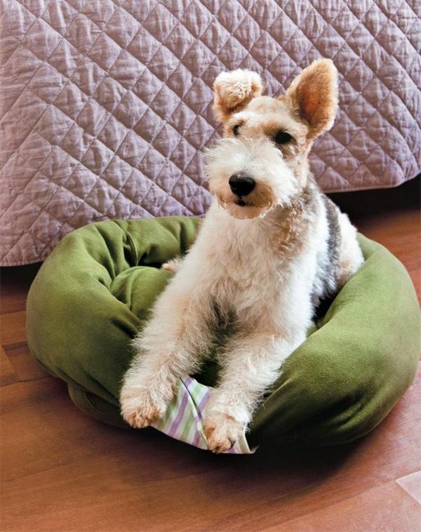 lit-pour-chien-un-lit-coussin-moelleux