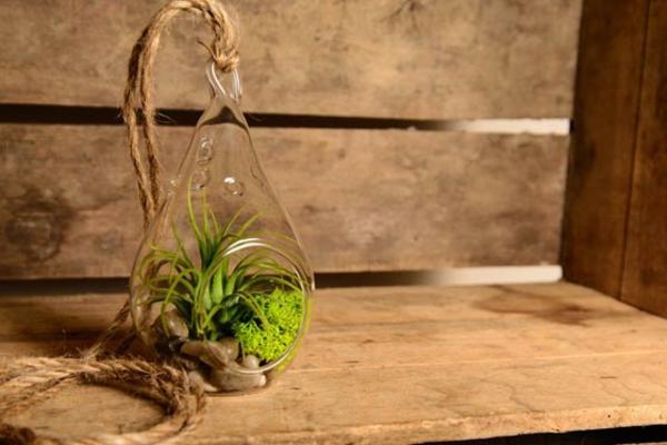 mini-jardin-zen-idées-phénoménales