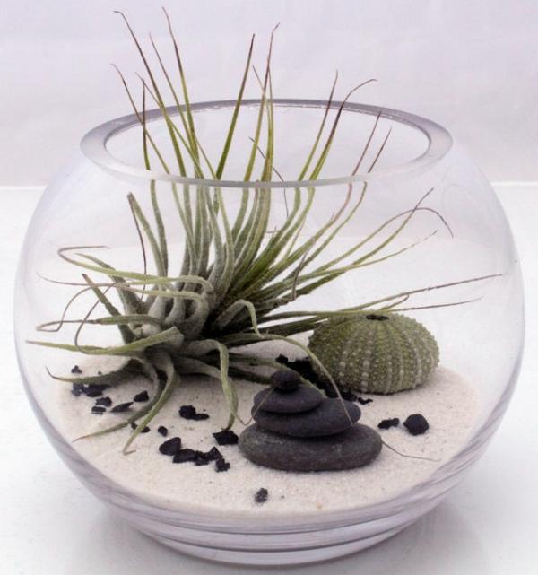 mini-jardin-zen-terarium