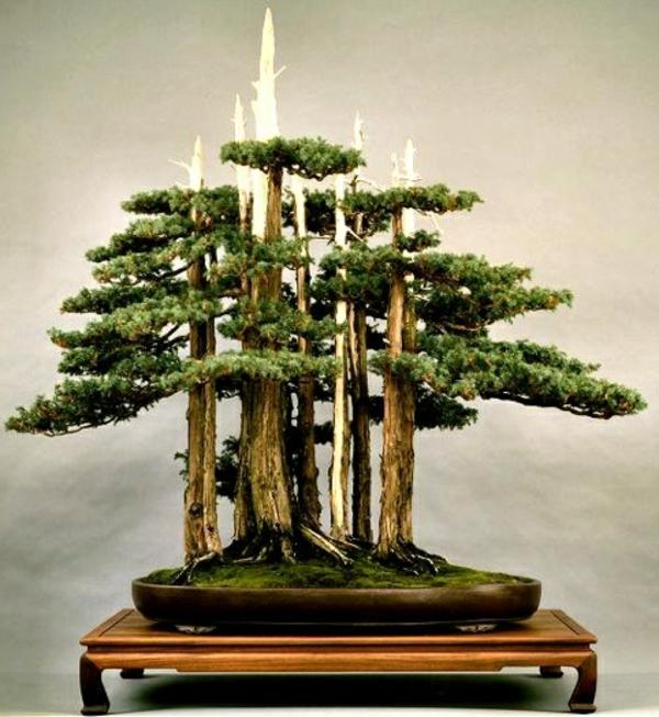 mini-jardin-zen-une-forêt-remarquable-petits-bonsais-impressionnants