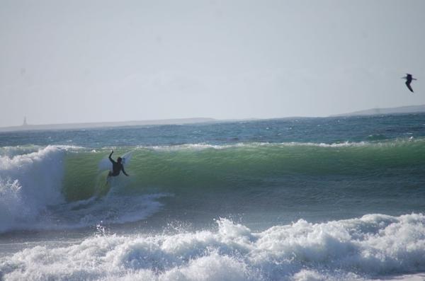 oiseau-surf-Biarritz-océan-France